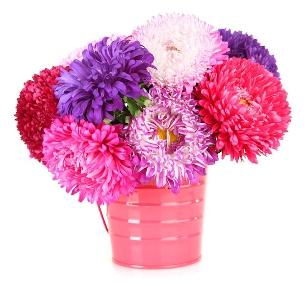 Flores brilhantes de áster em um balde, isoladas em branco