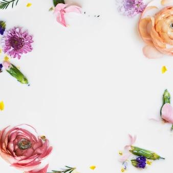 Flores coloridas de botão de ouro em banho de leite