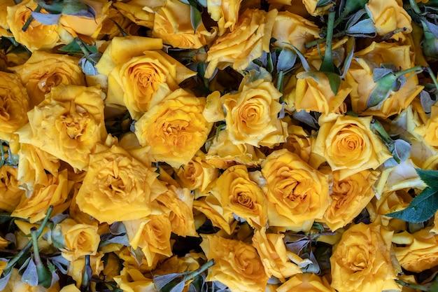 Flores coloridas de rosas e amarelas à venda para oferecer a deus durante a adoração na pequena índia, mercado de rua, cingapura, close-up, vista superior. fundo de rosas amarelas