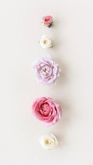 Flores coloridas desabrochando