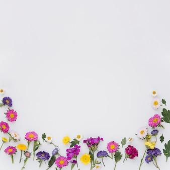 Flores coloridas em branco