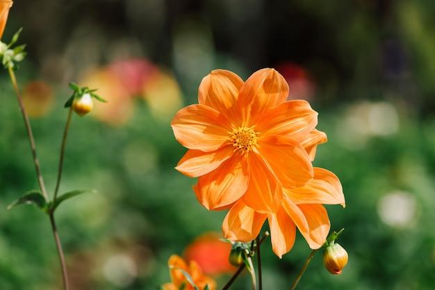 Flores coloridas em profundidade de campo