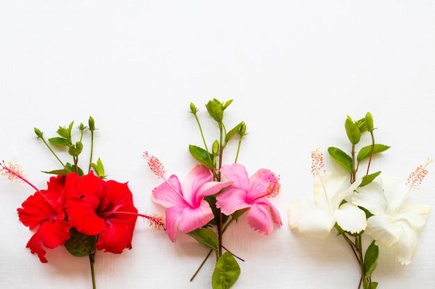 Flores coloridas hibisco arranjo plano plano estilo cartão postal