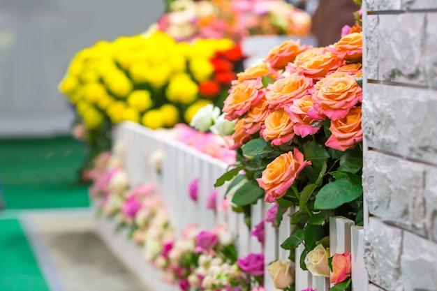 Flores coloridas na cerca do jardim do lado de fora