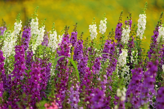 Flores coloridas naturais vista para o jardim paisagem