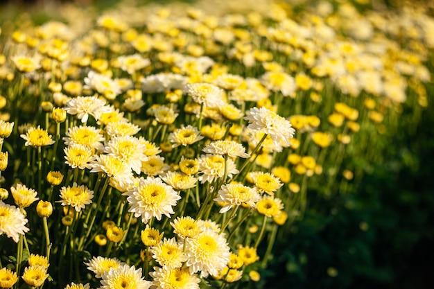 Flores coloridas no jardim suave e selecione o foco.