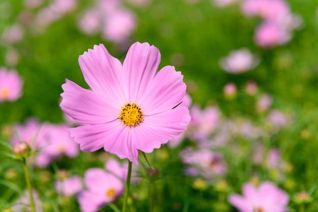 Flores coloridas no jardim