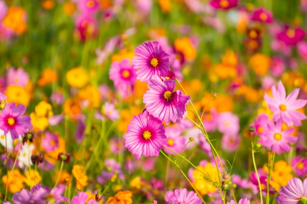 Flores coloridas no jardim.