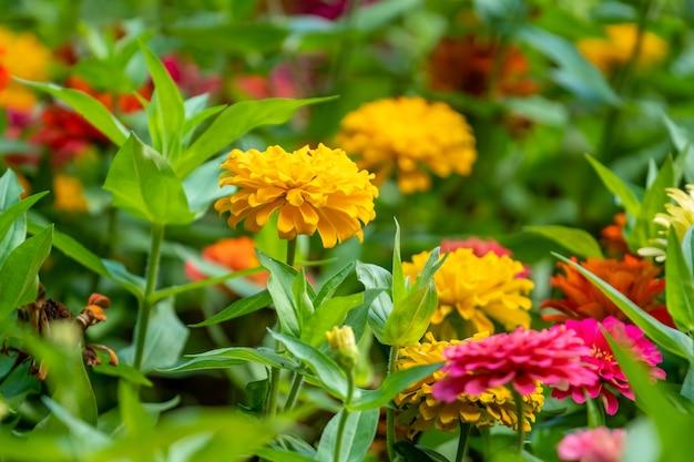 Flores coloridas no parque em batumi, geórgia. natureza