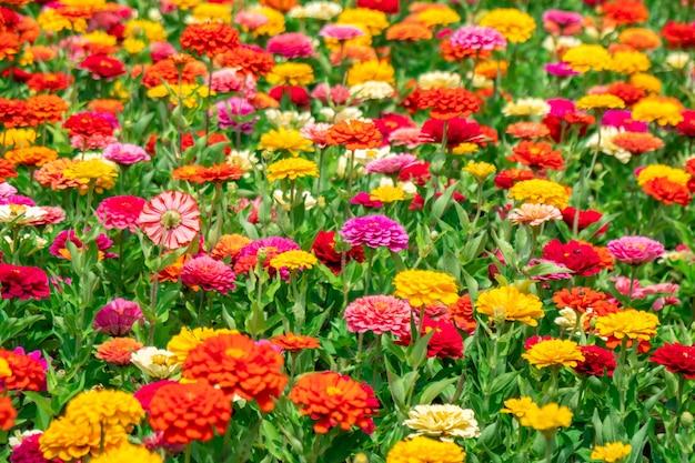 Flores coloridas no parque em frente à universidade estadual de batumi, geórgia. natureza.
