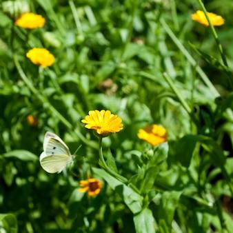 Flores com borboleta voando