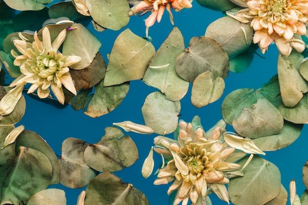 Flores com folhas na água azul
