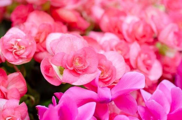 Flores cor de rosa com padrões de fundo desfocado