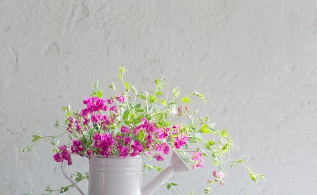 Flores cor de rosa de verão em um regador na parede branca de fundo