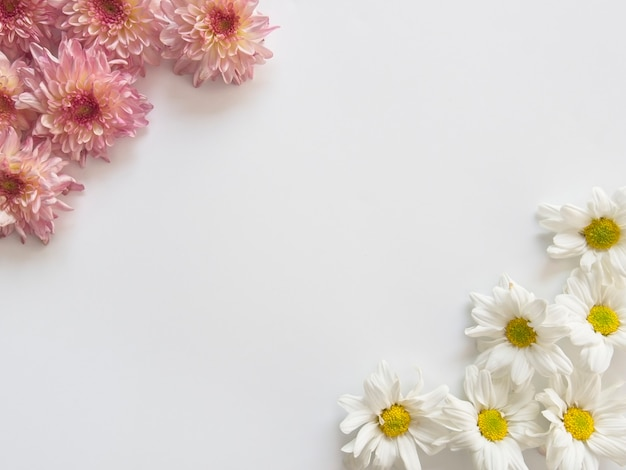 Flores cor de rosa e brancas, essas são chamadas de crisântemo, dois cantos do quadro