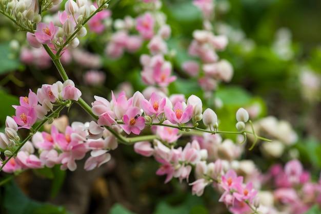 Flores cor de rosa e brancas na árvore, fundo desfocado isolado