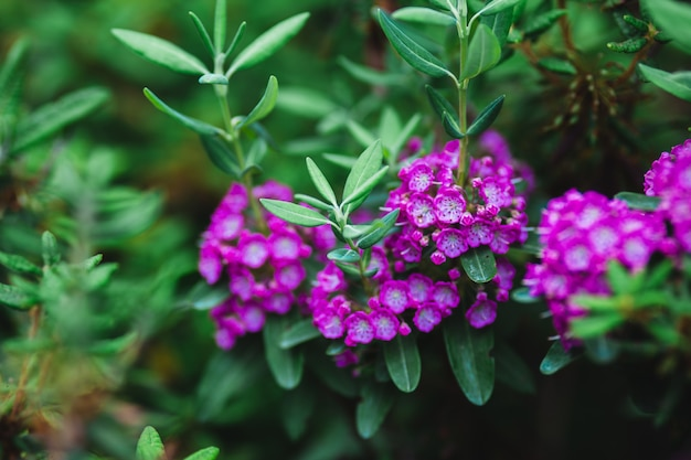 Flores cor de rosa e folhas verdes