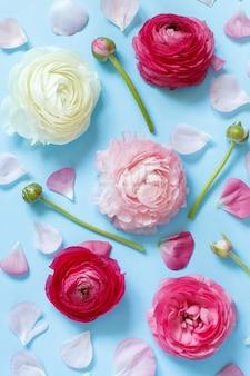 Flores cor de rosa e pétalas em uma vista superior de fundo azul claro