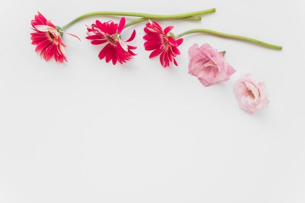 Flores cor de rosa e vermelhas em branco