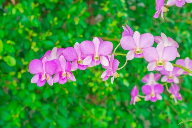 Flores cor de rosa na floresta.