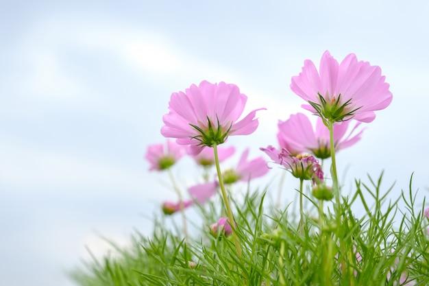 Flores cor de rosa no campo