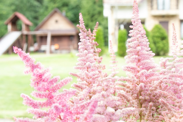 Flores cor de rosa no jardim com casa de campo na parede natural