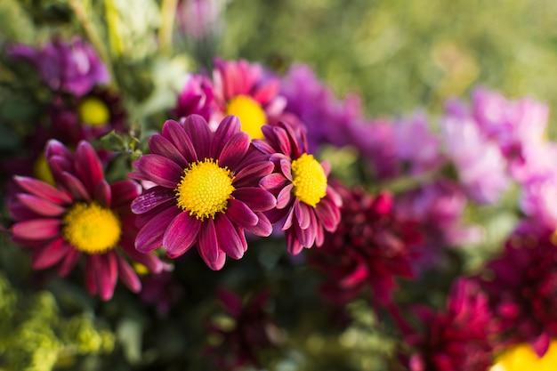 Flores cor de rosa no jardim
