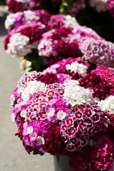 Flores cor de rosa no mercado dos fazendeiros