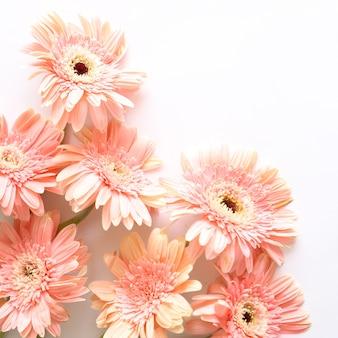 Flores cor de rosa sobre fundo branco para aniversário, aniversário, casamento floral frame