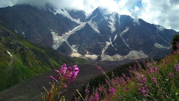 Flores crescem no sopé das montanhas