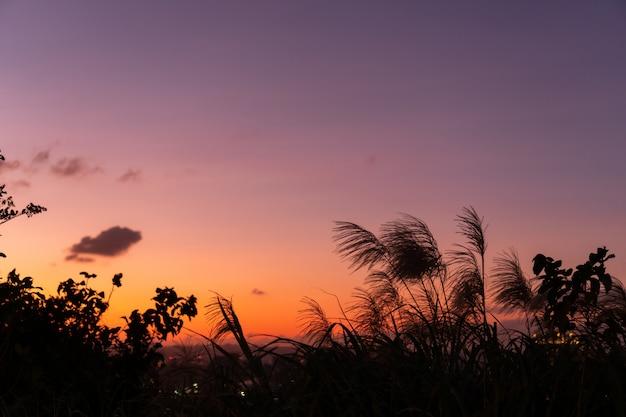 Flores da grama durante o pôr do sol. sombra de plantas com luz em tom quente. hora da noite na colina. foco suave no fundo da natureza.
