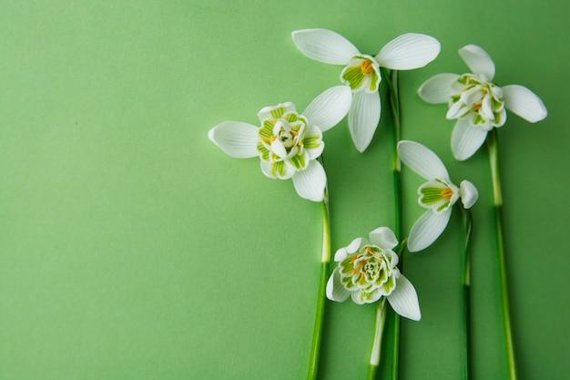 Flores da mola, snowdrops brancos sobre o fundo verde.