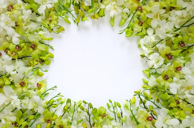 Flores da orquídea brancas e verdes