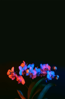Flores da orquídea brilhantes iluminadas pela luz de neon em um fundo escuro