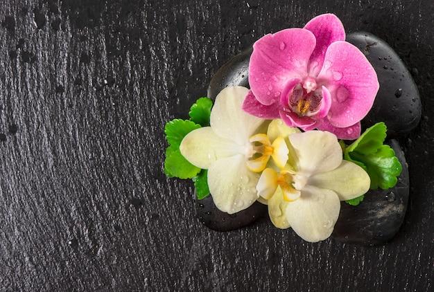 Flores da orquídea e folhas verdes com água cai sobre fundo preto. conceito de spa