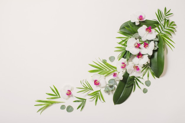 Flores da orquídea e folhas verdes em fundo branco