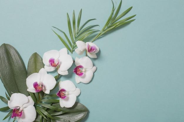 Flores da orquídea e folhas verdes em fundo de papel de cor hortelã