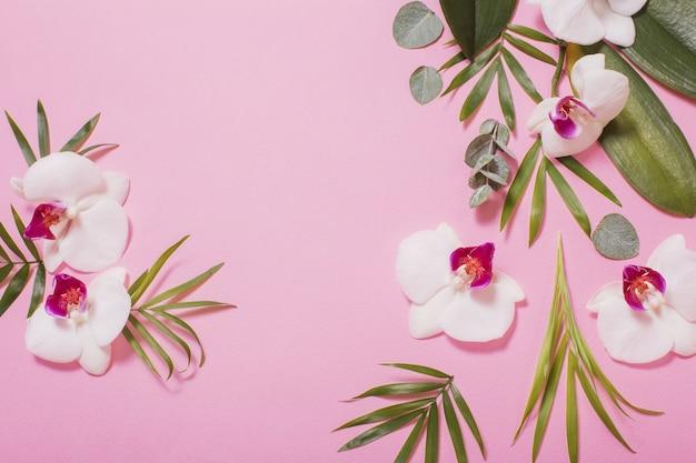 Flores da orquídea e folhas verdes em fundo rosa papel