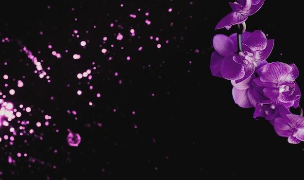 Flores da orquídea em preto com luzes desfocadas