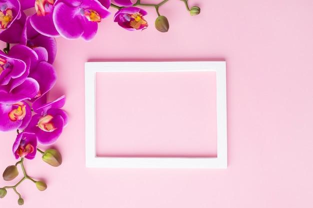 Flores da orquídea em um fundo de espaço de cópia rosa