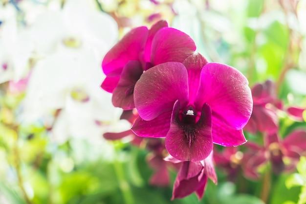 Flores da orquídea