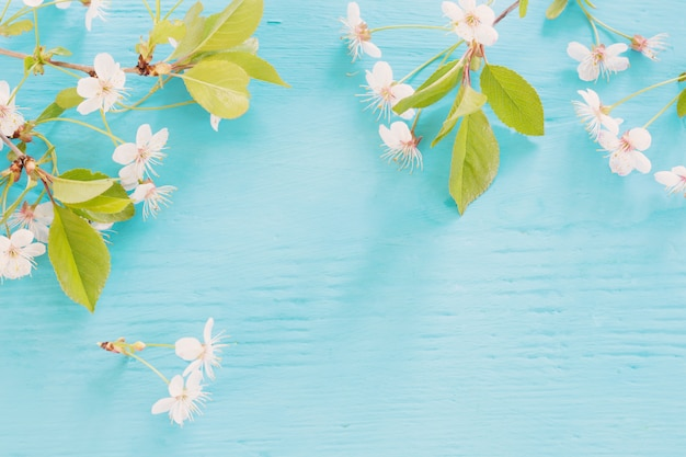Flores da primavera branca na mesa de madeira azul