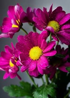 Flores da primavera close-up