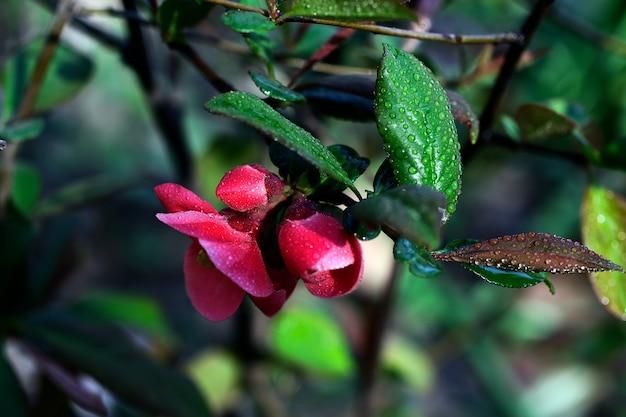 Flores da primavera com orvalho neles. fotografia-chave baixa. folhagem fresca e belas flores ao ar livre.