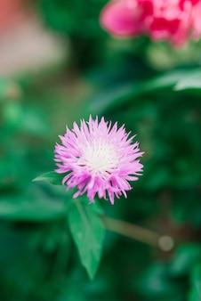 Flores da primavera crescendo e natureza que ganha vida
