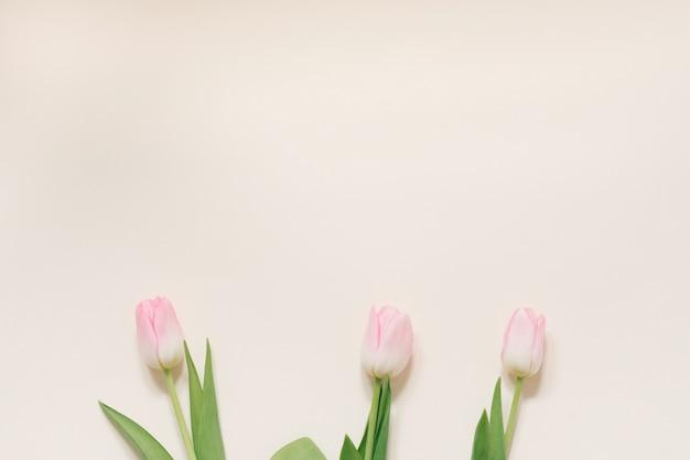 Flores da primavera de tulipas cor de rosa em um fundo branco, vista superior em estilo plano leigo. parabéns pelo dia da mulher ou da mãe. copie o espaço