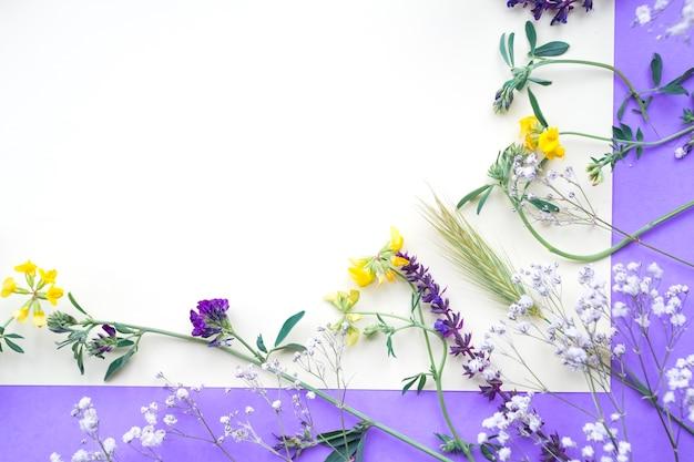 Flores da primavera em pano de fundo branco e roxo