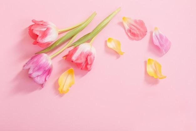 Flores da primavera na superfície rosa