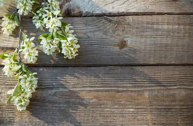 Flores da primavera na velha superfície de madeira