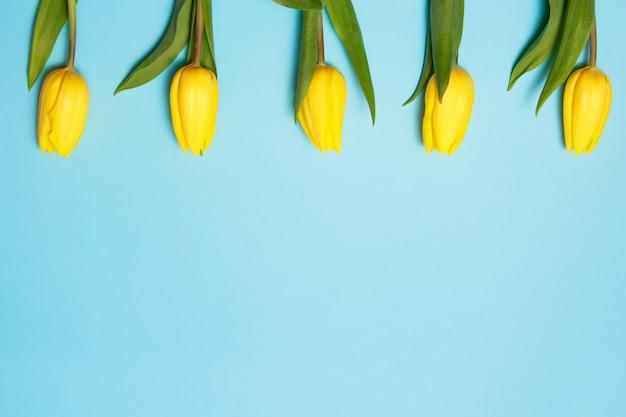 Flores da primavera. tulipas amarelas na borda de espaço de cópia de vista superior de fundo azul